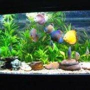 Aquarium Life (a.k.a. Church Life) | missionalchallenge.com
