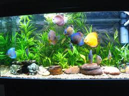 Aquarium Life (a.k.a. Church Life)   missionalchallenge.com