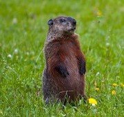 Groundhog Day! 9 Lessons for Church Planters | missionalchallenge.com