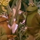 Church Planting Lessons from Frog and Toad | missionalchallenge.com