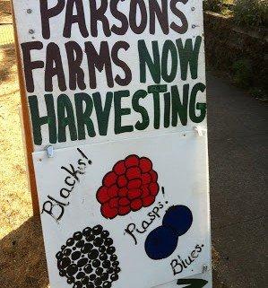 Now Harvesting! | missionalchallenge.com